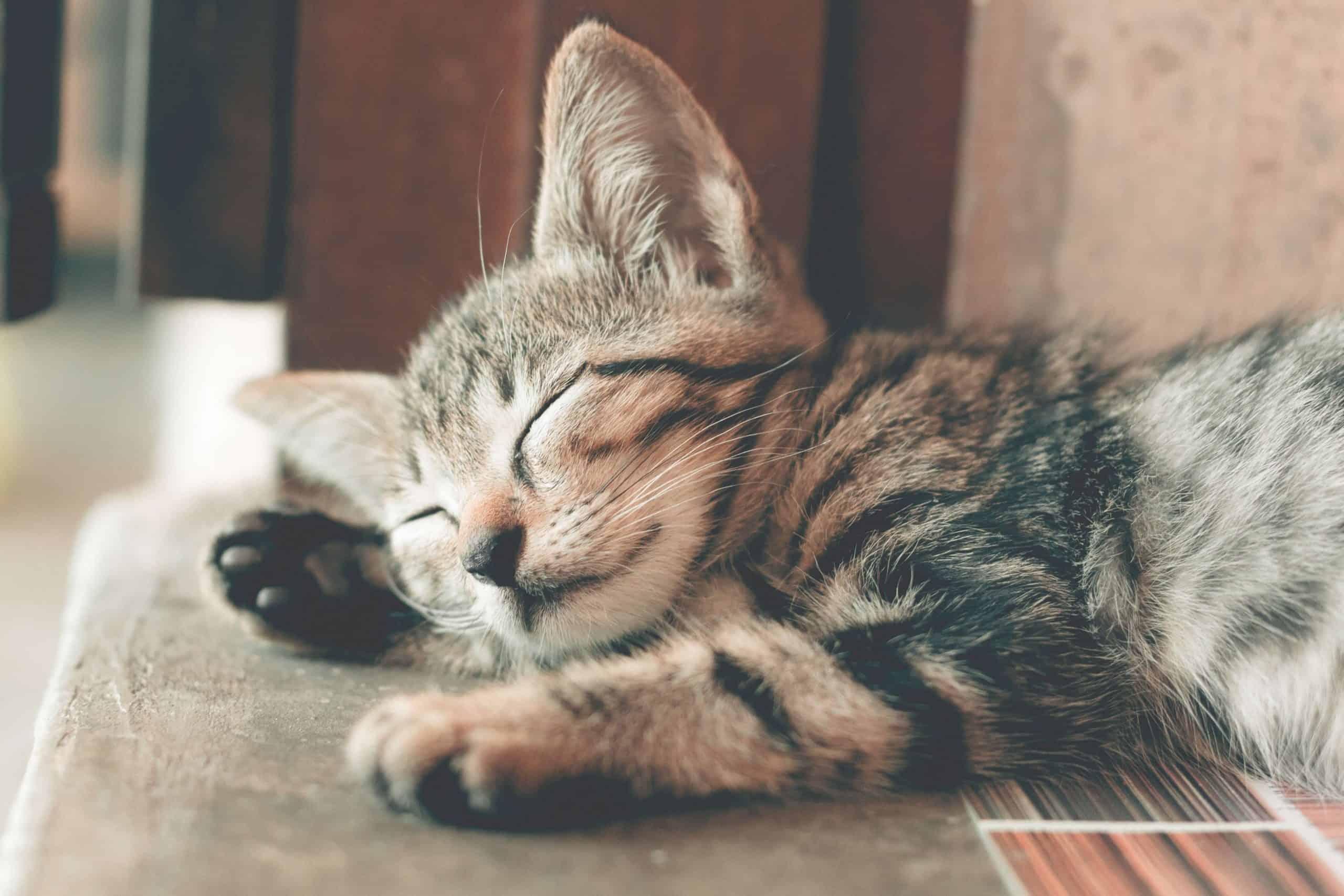 W nowy rok z kotkami. Specyficzny kalendarz podbija serca internautów